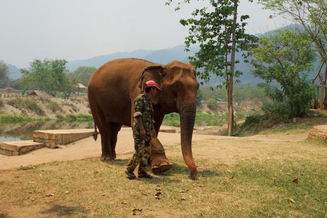 elephant park3