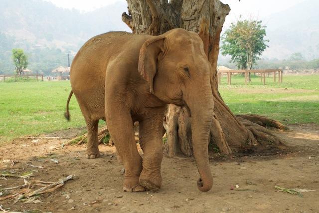 elephant park8